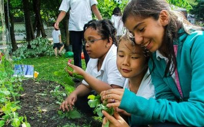 Ca pousse and the Importance of School Gardens